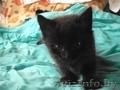 Подарю милого котенка